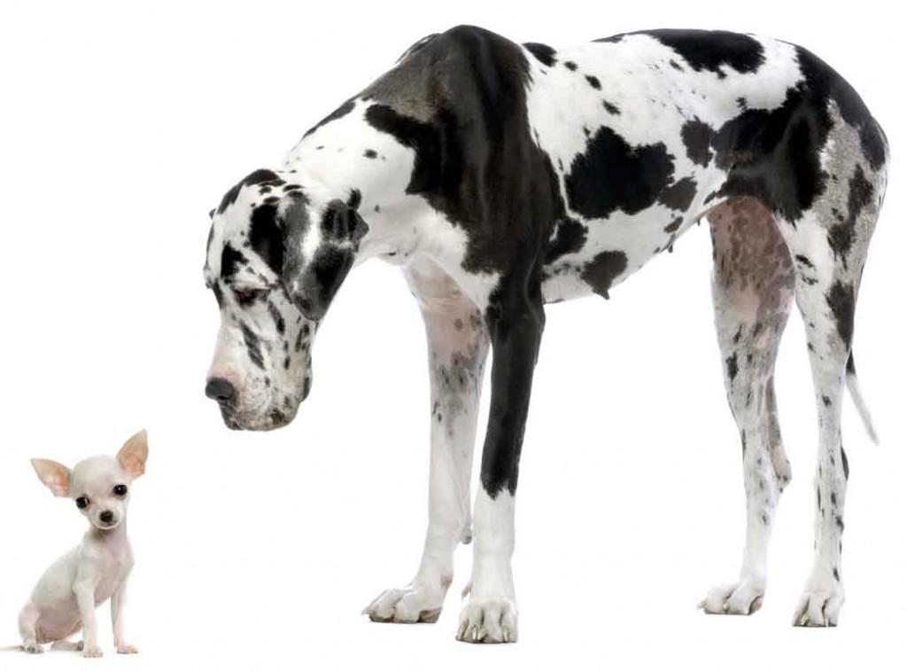 Small vs Big